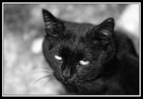 superstition by Phototubby