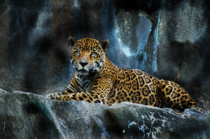 Jaguar by GalaxyPanther