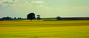 Fields of gold by Feidhelm