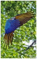 Landing Macaw by W0LLE