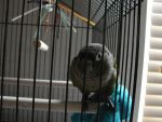 In the cage - Kiwi by Zolk