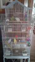 Lucy, Ricky, Fred and Ethel All in a Birdcage! by MikeEddyAdmirer89