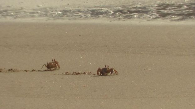 Crabs by Freedrive67