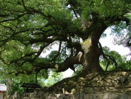 Sacred Tree by calger459