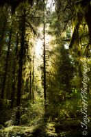 Hoh Rain Forest II (1 of 1) by FallenLightImages