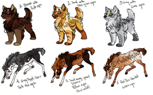 Point Adoptable Foals + Pup Set by Malk-White