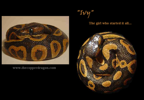"""""""Ivy"""" Baby Ball Python Cast by TheCopperDragon2004"""