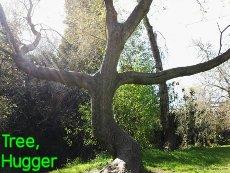 Tree Hugger by eriklectric