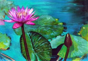 Pink Lilly by XRlS