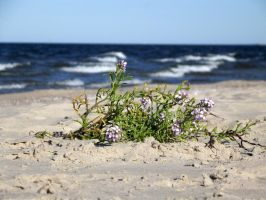 Flowers on the beach by Adagem