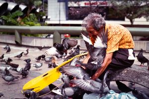 pigeons and a guitar by William-Cordero