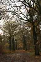 Beech lane - shaded by steppelandstock