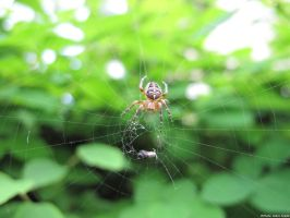 Prey in the spider's web by Goppo713