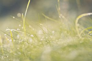Gras by Freacore