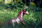 schleich by PipStudio