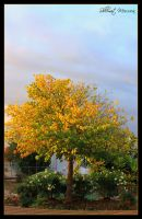 Judas tree at fall 2 by ShlomitMessica