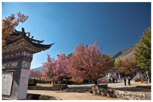 Chinese Cherry Blossoms by jawg1982