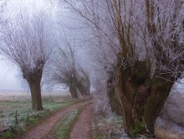 Willows IV by starykocur