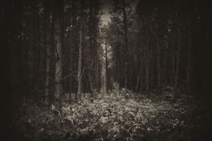 Trees. Darkness. Undergrowth. by Putago