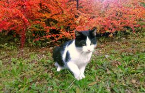 Cat in autumn 2 by love1008