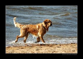 Dog in Water 2 by grugster