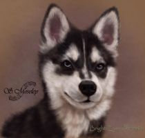 HUSKY PUPPY by SuzanneMoseley