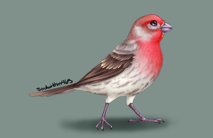 House Finch by soulwithin465