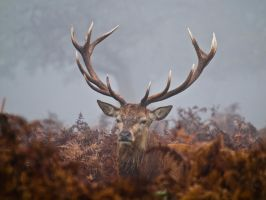 Red Deer 00 - Nov 11 by mszafran