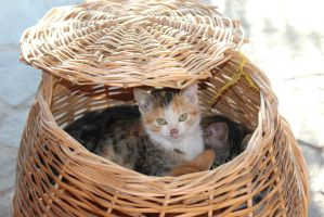 cat in a basket by MyBrightSide33