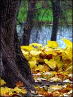 Fall composition... by Yancis