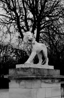 Lion by BlackBy