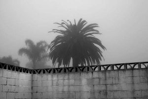 palm and fence in the fog by myoung4828