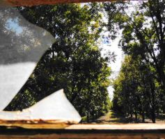 In the Middle of a Pecan Grove by SharPhotography