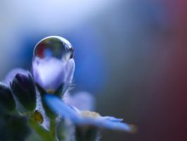 Tiny Bug On A Forget Me Not by Jenni77