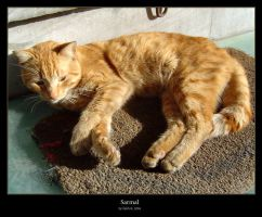 Sarmal by cat-lovers