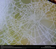 Spiderweb Dewdrops Stock Texture 2 by Melyssah6-Stock