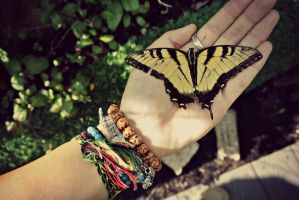 beautiful butterfly death by peaceloverainbows