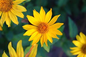 yellow by steven6773