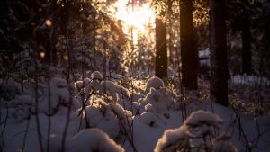 The Sun Greets the Forest pt.2 by Maizzi