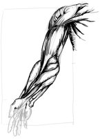 Hand and arm study by Sayhono