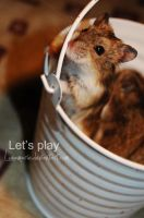 Let's play by Lunamarie