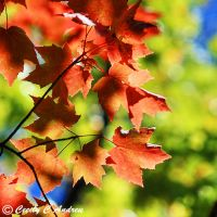 Autumn Is In the Air by CecilyAndreuArtwork