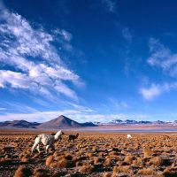 Altiplano: Laguna Colorada -1- by FredoPhoto