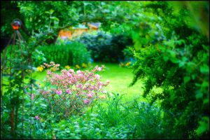 Dreamy garden by calimer00