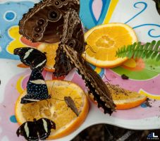 Butterfly Moments...buffet by imonline