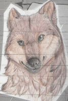-Jacob Black- by wolf-girl-spirit