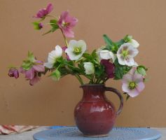Hellebores 4 by passagere-DA