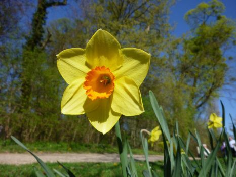 Narcissus by Auror-a