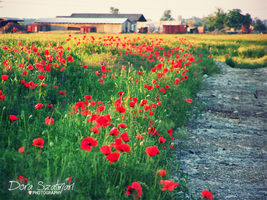 poppy row apart from the city by szdora91