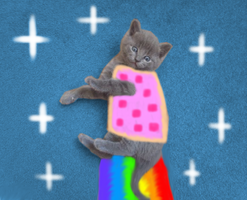 Realistic Nyan Cat by PrankStarz101